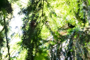 Kunstreise-Valle-Agredo-Dante-Alighieri-KunstBox-DSC2889-by-FOTO-FLAUSEN