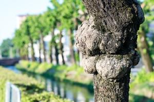 Kunstreise-Valle-Agredo-Dante-Alighieri-KunstBox-DSC3285-by-FOTO-FLAUSEN