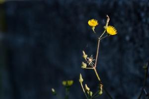 Kunstreise-Valle-Agredo-Dante-Alighieri-KunstBox-DSC3289-by-FOTO-FLAUSEN