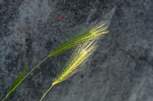 Kunstreise-Valle-Agredo-Dante-Alighieri-KunstBox-DSC3290-by-FOTO-FLAUSEN