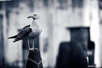 Kunst-Reise-KunstBox-Dante-Alighieri-_DSC9570-FOTO-FLAUSEN