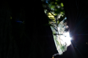 Kunstreise-Valle-Agredo-Dante-Alighieri-KunstBox-DSC2912-by-FOTO-FLAUSEN