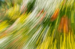 Kunstreise-Valle-Agredo-Dante-Alighieri-KunstBox-DSC3822-by-FOTO-FLAUSEN